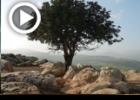 """הבעש""""ט מקדש את עצמו בקדושת ארץ ישראל"""