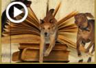 3 שרי המלך ו-3 כלבים